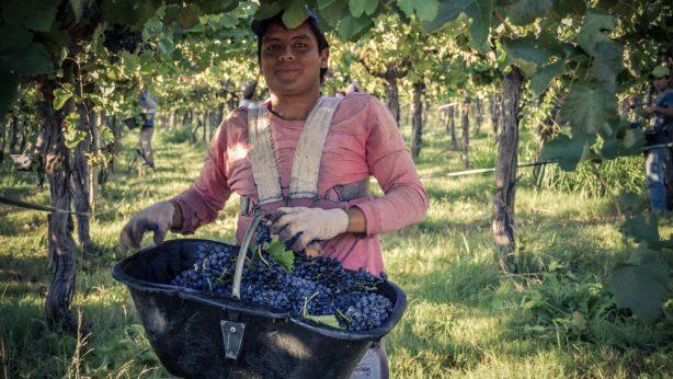la riojana - wijngaard