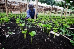 koffie teelt agro-ecologie